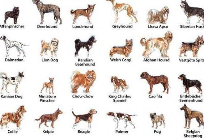 Estas son una de las mejores razas de perros.