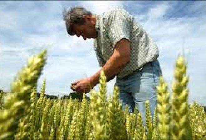 Un agricultor trabajando
