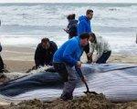 La cría de ballena