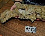 Algunos de los restos encontrados del animal.