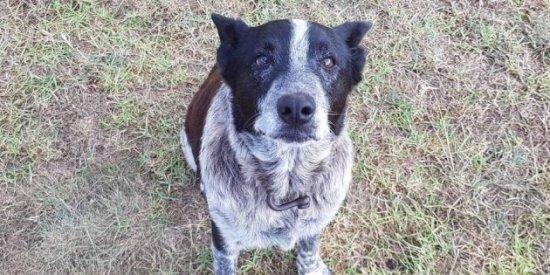 La ayuda de un viejo perro, sordo y ciego, resulta clave para localizar a una niña de tres años que había desaparecido