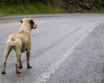 Un perro abandonado de los millones que se maltratan al año.