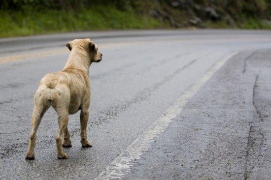 Cáceres se une en contra del abandono y el maltrato animal.