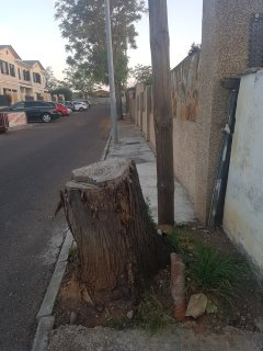 Tronco de un árbol y poste, obstruyendo el paso. Javier Píriz